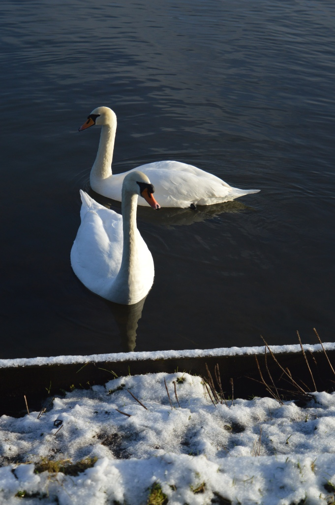 Our Great 2015 Outdoors Bucketlist, dontcallmestepmummy, blended family, mummy blog, snow, winter days, yarrow valley country park, swans