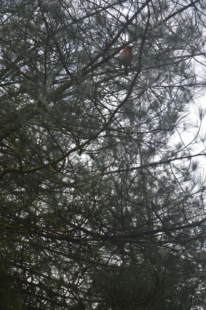 robin, bird spotting, Gruffalos Child Trail, Delamere Forest, country kids, Our Great 2015 Outdoors Bucketlist, dontcallmestepmummy, blended family, mummy blog